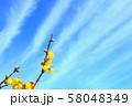 空とロウバイ 58048349