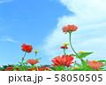 ジニア 58050505