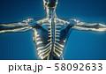 Blood Vessels of Human Body 58092633