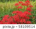 奈良県 彼岸花ロード 58109514