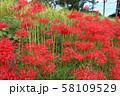 奈良県 彼岸花ロード 58109529