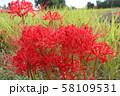 奈良県 彼岸花ロード 58109531