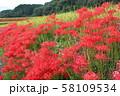 奈良県 彼岸花ロード 58109534