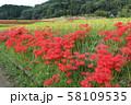 奈良県 彼岸花ロード 58109535