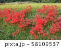 奈良県 彼岸花ロード 58109537