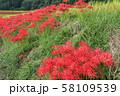 奈良県 彼岸花ロード 58109539
