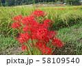 奈良県 彼岸花ロード 58109540