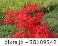 奈良県 彼岸花ロード 58109542