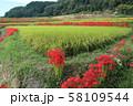 奈良県 彼岸花ロード 58109544