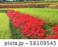 奈良県 彼岸花ロード 58109545