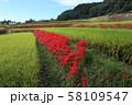奈良県 彼岸花ロード 58109547