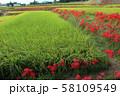 奈良県 彼岸花ロード 58109549