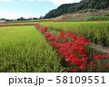 奈良県 彼岸花ロード 58109551