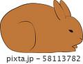ウサギ 58113782