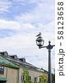 小樽運河 カモメ イメージカット 58123658