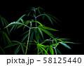 cannabis on a Black background 58125440