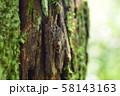 マメノキシタバ 横側 58143163