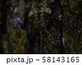コシロシタバ アップ 58143165