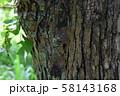 マメノキシタバとコシロシタバ 58143168