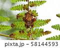 イシサワオニグモ 58144593