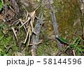 ジグモの仲間の巣 58144596