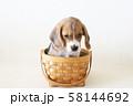 バスケットの中の仔犬 58144692