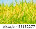 日本の風景「稲穂」 58152277