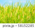 日本の風景「稲穂」 58152285