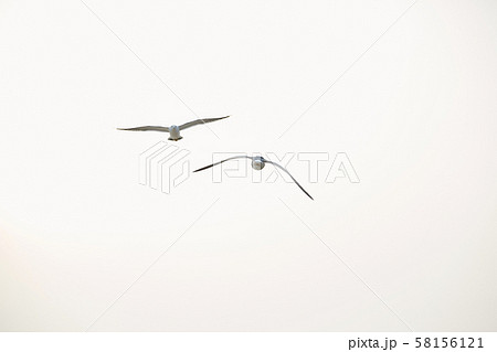 Seagull flying at the beach. 58156121