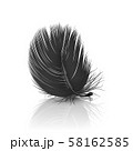 Vector 3d Realistic Falling Black Fluffy Twirled Feather with Reflection Closeup Isolated on White 58162585