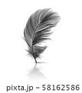 Vector 3d Realistic Falling Black Fluffy Twirled Feather with Reflection Closeup Isolated on White 58162586