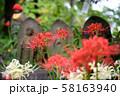 高幡不動尊のヒガンバナ 58163940