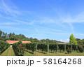 安曇野 秋のワイン用ブドウ畑 58164268