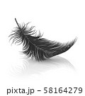 Vector 3d Realistic Falling Black Fluffy Twirled Feather with Reflection Closeup Isolated on White 58164279