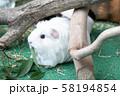 餌を食べるモルモット 58194854