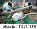 動物園のモルモット 58194856