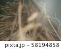 カヤネズミ 58194858