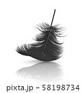 Vector 3d Realistic Falling Black Fluffy Twirled Feather with Reflection Closeup Isolated on White 58198734