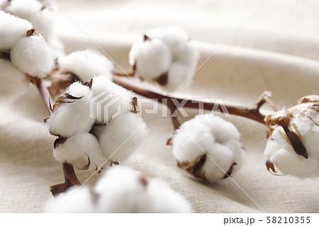 綿花 コットンリネン 58210355