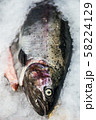 fish sea salmon lie on the ice in the store or in the kitchen 58224129