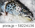 trout fish lying on the ice in the store or in the kitchen 58224136
