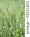 麦の穂 58231832