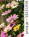 ピンクの花 58231956