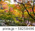 有馬温泉・瑞宝寺公園の紅葉(日暮しの庭) 58258496