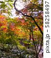 有馬温泉・瑞宝寺公園の紅葉(日暮しの庭) 58258497