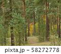 pine forest on sand dunes autumn 58272778