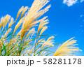 ススキ 青空 初秋 【長野県】 58281178