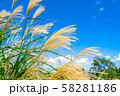 ススキ 青空 初秋 【長野県】 58281186