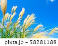 ススキ 青空 初秋 【長野県】 58281188