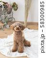 モデルと犬 58300985